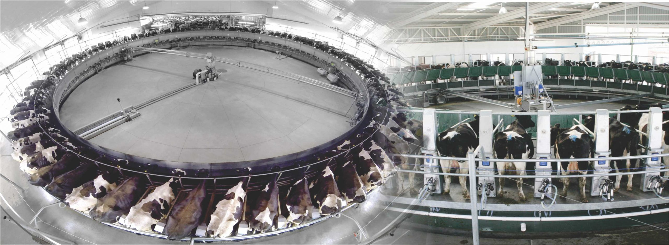 Rotary Automatic Milking Parlor